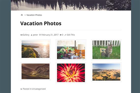 gallery ảnh hiển thị trên website