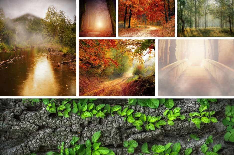 modula-image-gallery
